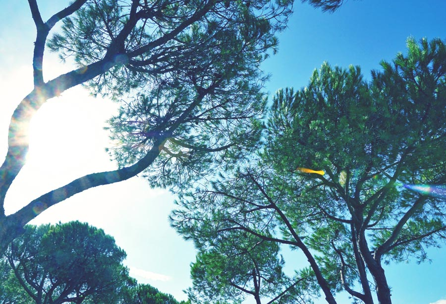 Bäume in Punta Ala